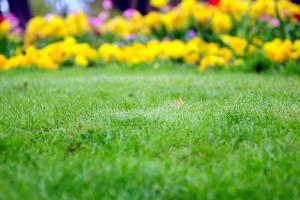 lawn, lawncare, landscaping