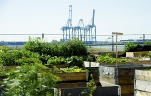 Urban gardening is gaining popularity and has many benefits