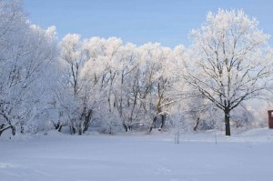 Winter Landscape with icy trees