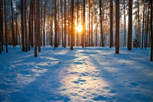 Tips for Winter Lawn Care and Maintenance
