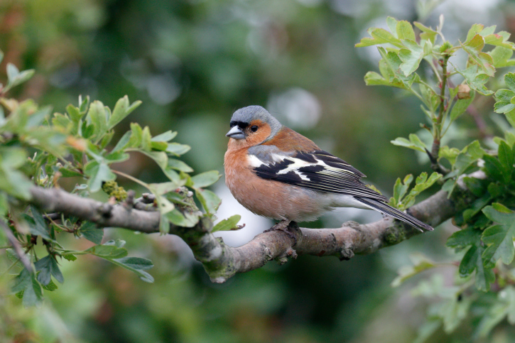 Landscaping Tips for Attracting Birds on Birds Backyard Landscapes id=90074