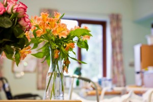 The presence of plants in hospital recovery rooms (or the ability to visually see a garden from the window) can actually help patients heal faster.
