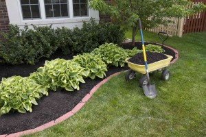 landscaping saves money