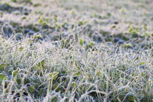 winter-plant