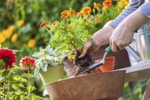 4 Spring Clean Up Tips for Your Landscape