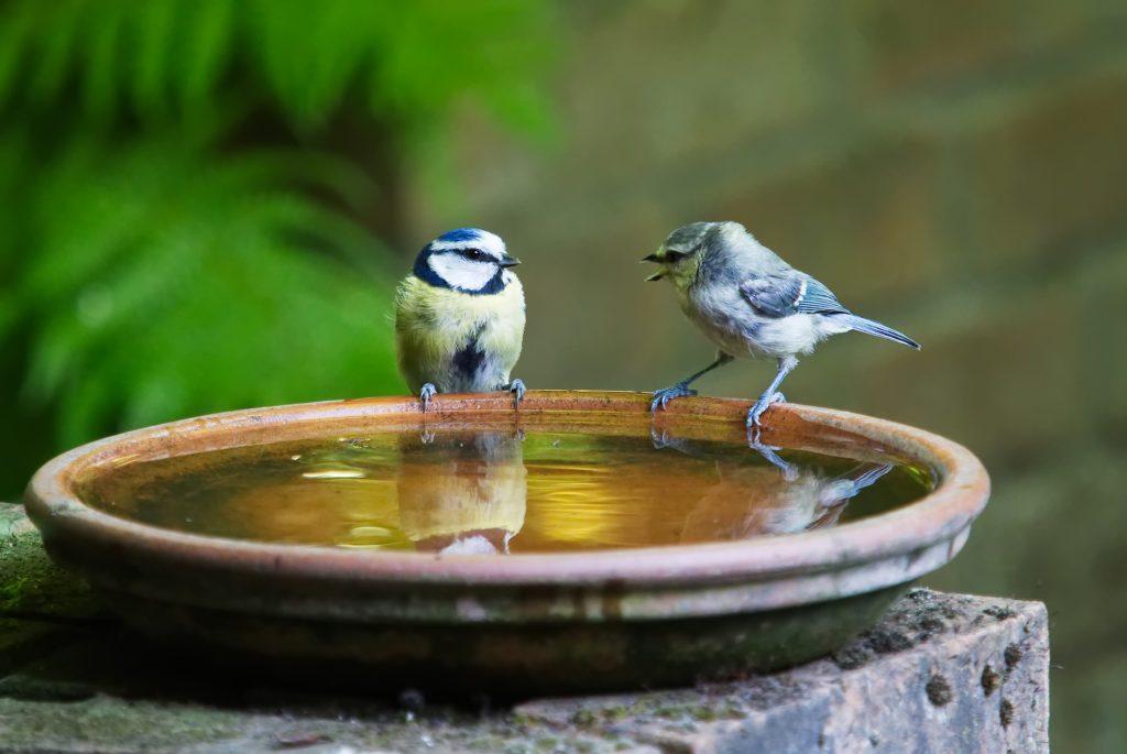bird-baths-make-great-projects-for-children