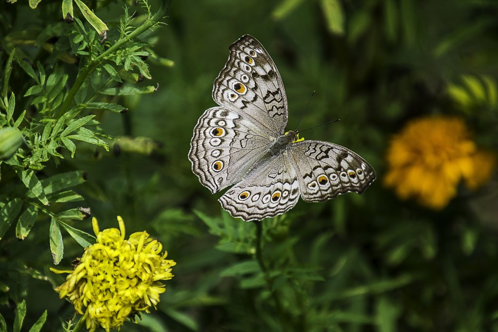 colorful-flowers-are-great-for-butterflies