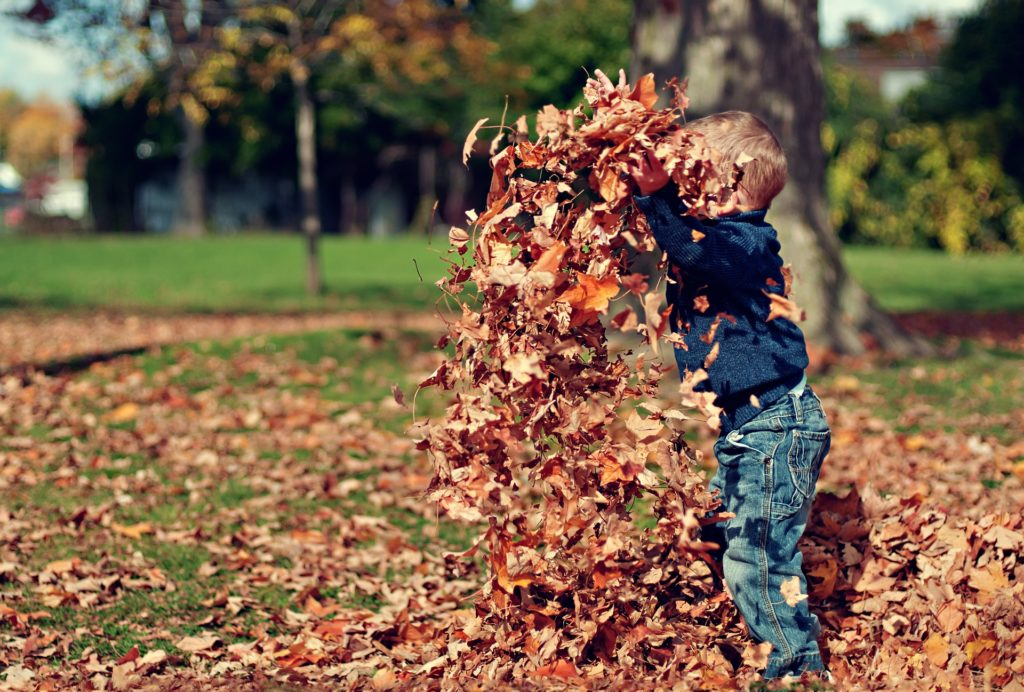 landscaping-tips-for-fall